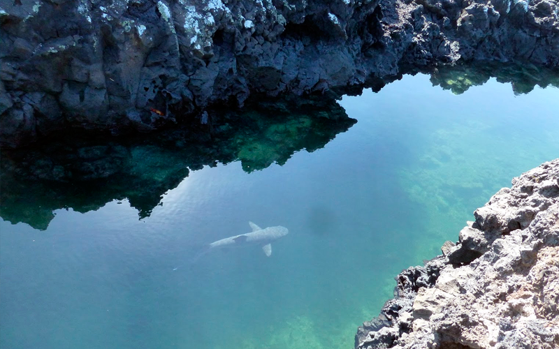 tintoreras-channel-white-tip-shark-galapagos-hotel-travel-family-vacation
