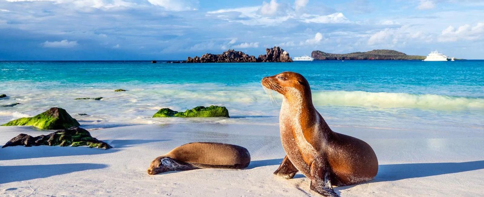 Costa Rica – Equador – Panamá com Ilhas Galápagos e Canal do Panamá.