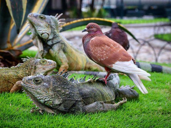 parque das iguanas