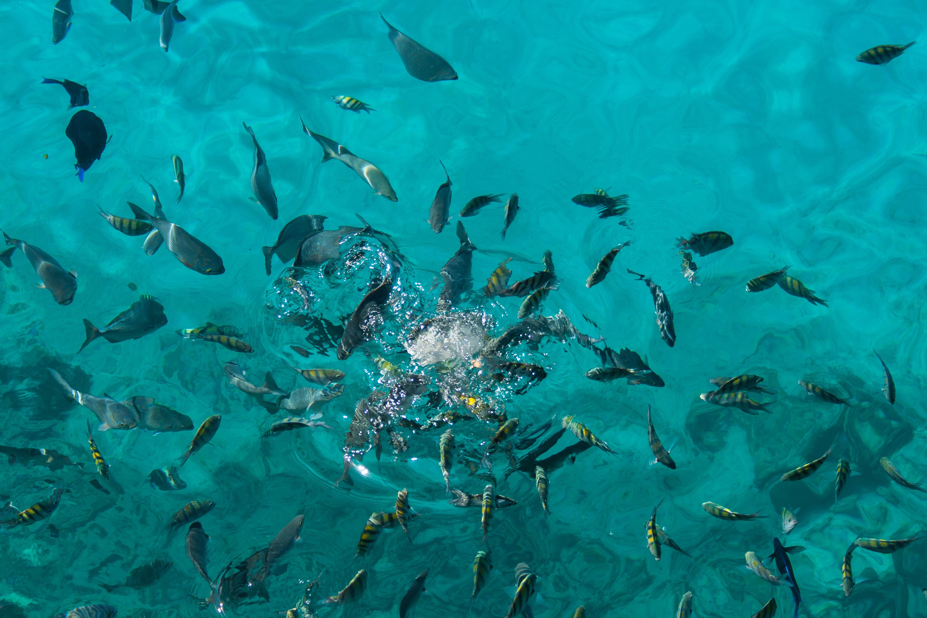 Fishes_at_West_View_(8333599404)