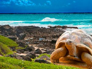 tartarugas-santa-cruz